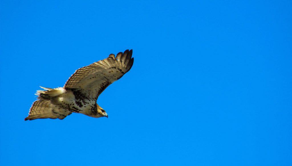 new-heights-for-hawksem